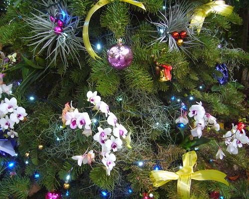 Orchid Christmas Tree.Christmas Greetings From Singapore Botanic Gardens