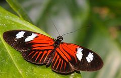 IMG_7913 (Hark-01) Tags: flowers macro nature beautiful closeup canon butterfly garden flying wings sigma beautyinnature 150mmmacro 40d vosplusbellesphotos