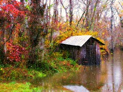 Amite River Flood (juliealicea1947) Tags: louisiana flood shack amiteriver frenchsettlement livingstonparish bayviewtavern
