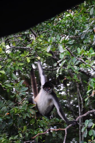 The boldest of a troop of monkeys we saw swinging from the trees.