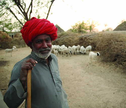 Shepherd in Rajasthan, India