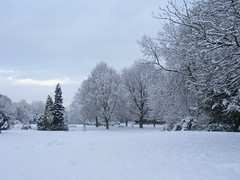 Weston Park in the snow, January 2009