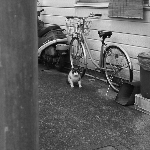 Today's Cat@2010-01-09