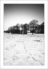 Winter (MaddixLuxx) Tags: trees winter sun snow black cold nikon whitewinter ashowoff