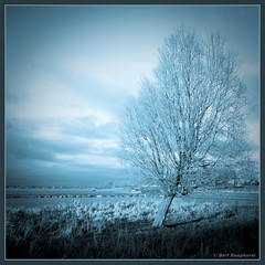 Winter Blues .. (bert.raaphorst) Tags:  bert allrightsreserved cyanotype tistheseason wintry bleus biogon raaphorst winterinholland coth zoeterwoude winterblues imagesforthelittleprince bertr cz4521mmzm