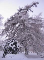 Träd med personlighet