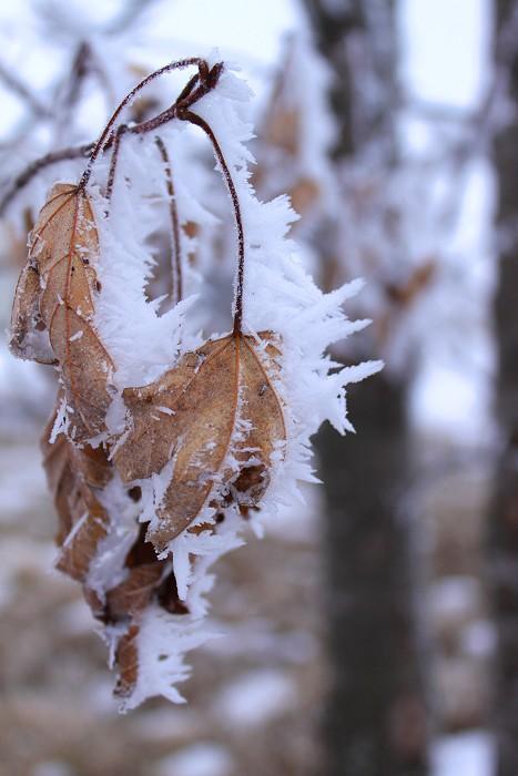 01-18-frozen7