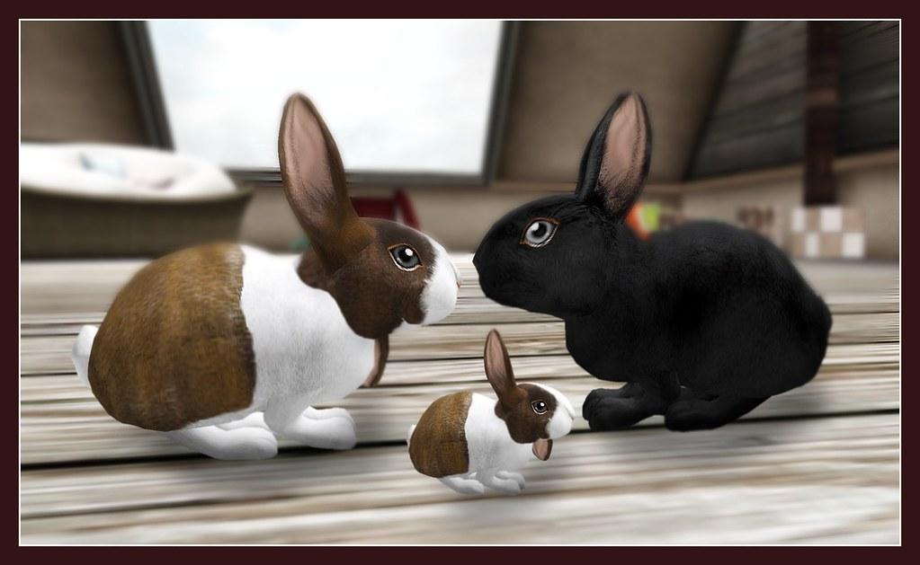 Bunny Family Portrait