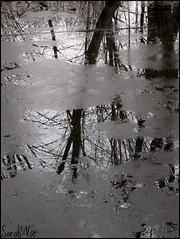 (Sarah-Vie) Tags: tree nature eau arbres marais arbre étang réflection feuillage
