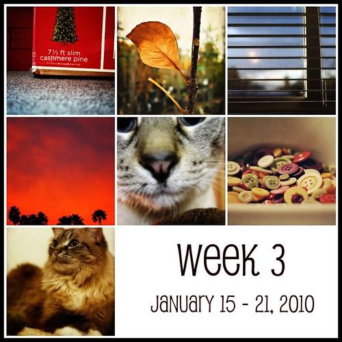 Week 3  (365:2010)