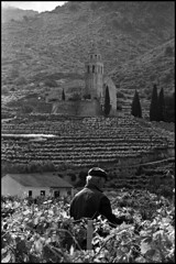 Surrounded by vineyards (Mediterraneo) Tags: bw slr island noiretblanc trix croatia 100mm d76 vis biancoenero adriatic exakta dalmatia 10028 vx1000 komia classicblackwhite meyeroptikgorlitz meyergorlitzorestor10028