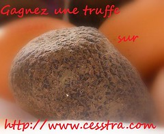 concours_truffe