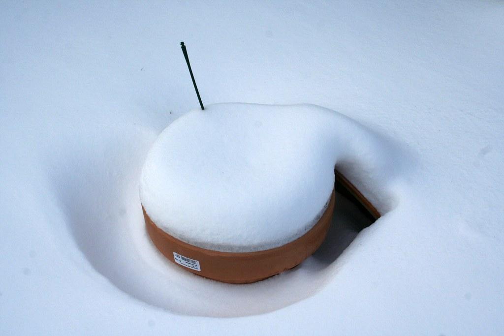 Urtepotte i sne