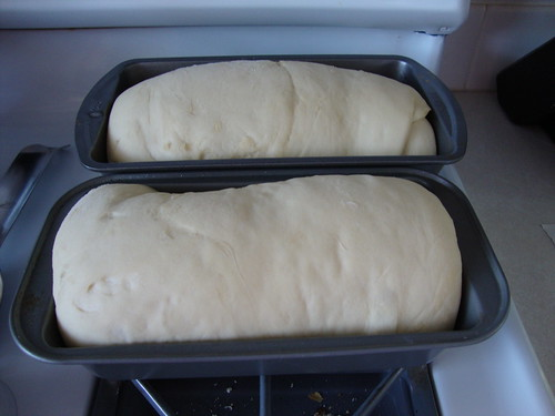 My first loaves rising