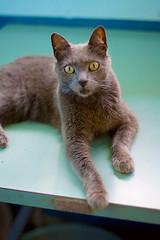 kidney disease cats