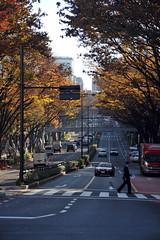 Tokyo 2009 - 表参道 - 散步隨手拍(1)