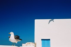 Shadow, Essouira - Morocco (tamertamar) Tags: africa shadow sea white bird seaside seagull morocco essouira whitewashedwalls