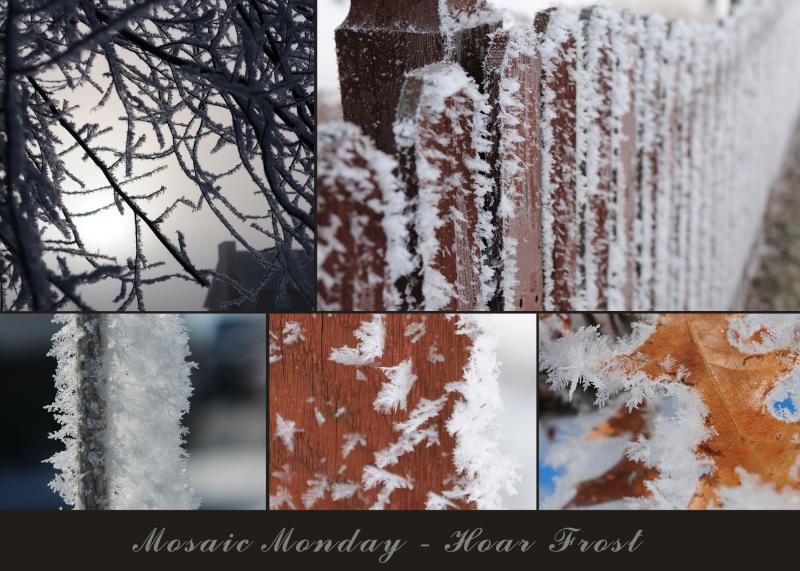 Hoar Frost Mosaic