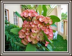 Flores para Juana y Dalila, hermanas y amigas. (la india del cibao) Tags: dominican republic republicadominicana ocoa quisqueya laindiadelcibao