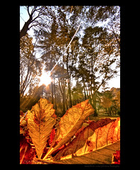 Rolling In The Leaves  (HDR) (Kuzeytac) Tags: park autumn light red orange sun color colour detail macro tree fall texture nature yellow backlight digital turkey geotagged golden leaf europa europe ray vibrant trkiye turkiye creative vivid wideangle natura istanbul backlit moment makro geotag hdr sunray leyla doku manzara gne sar lsi lucisart aa k gulhane krmz renk yaprak sarayburnu doa tabiat renkler supershot detay damlalar 1020sigma the4elements canoneos400d canoneosdigitalrebelxti theunforgettablepictures genia kuzeytac danisment 100commentgroup copyrightedallrightsreserved
