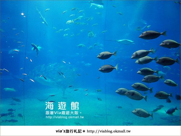 【via關西冬遊記】世界最大極的水族館~大阪海遊館13