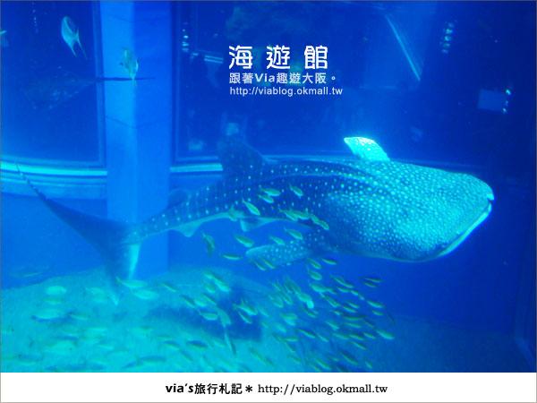 【via關西冬遊記】世界最大極的水族館~大阪海遊館14