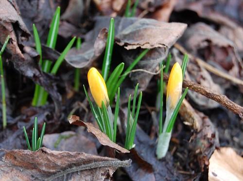 Hurrah for Spring