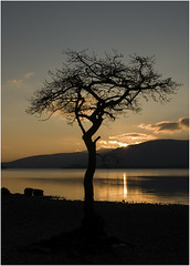 It's that tree again ... (Sunapics) Tags: sunset silhouette millarochybay 04291f