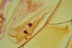 DSC_0136 (John Aho) Tags: microscopy hiddenworld nikond90 lietzmicroscope