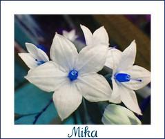 Petites fleurs, grande beauté.