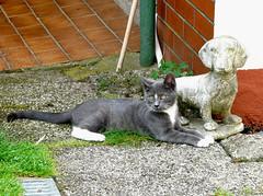 Ein Pärchen (Tatjana_2010) Tags: cats gatos katzen
