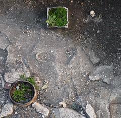 garden of drains