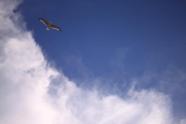 Seagull-001