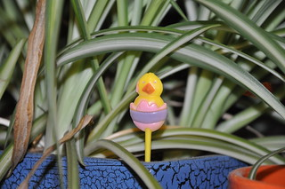 chick on a stick