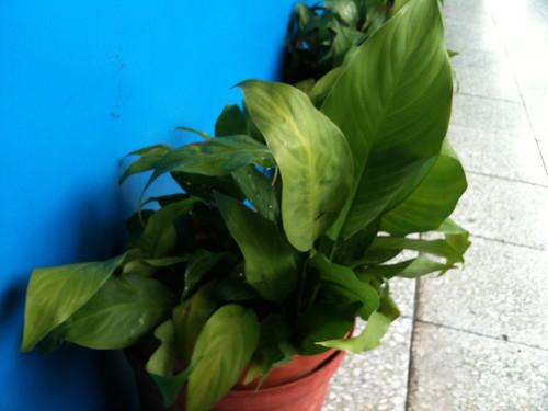教室外的植物