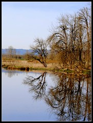like a mirror (picma) Tags: trees lake water reflections pond wildlife national refuge earlyspring ridgefield