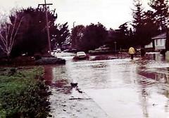 FLOOD_15 (etgeek (Eric)) Tags: permanentebypass creek muddywater carmelterrace blachschool 1983 flood losaltos losaltosfire lafd losaltospublicworks santaclaracountyfloodcontrol wash mud permanentecreek 9682742 altameaddrive