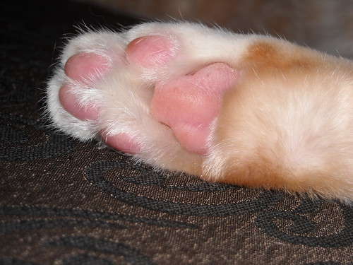 Kitty feet!