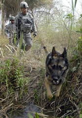 Military working dog (1st Armored Division and Fort Bliss) Tags: war military iraq soldiers government cache weapons usarmy airassault iraqisoldiers