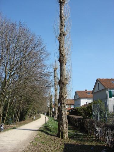 Fischerweg, 24.3.2010