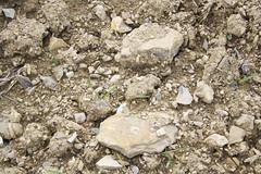 IMG_4955 (Vineria Group) Tags: il podere palazzino