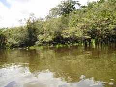 Rio Preto da Eva - Amazonas (Wilmar Santin) Tags: brazil brasil am amazon brasilien paisagem amazonas brsil amazonia amaznia amazone amazzonia ribeirinha amazonien riopretodaeva paisagemamaznica paisagemribeirinha paisagemribeirinhaamaznica
