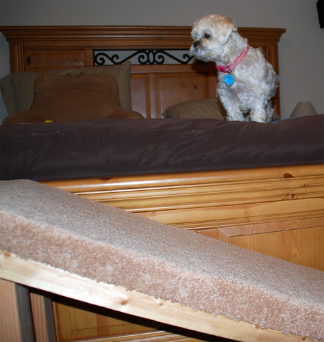 Come-on-Bilbo