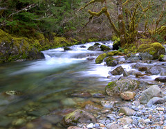 Cold and  Clear. (beardedelf1) Tags: cold creek river north clear waters opal santiam