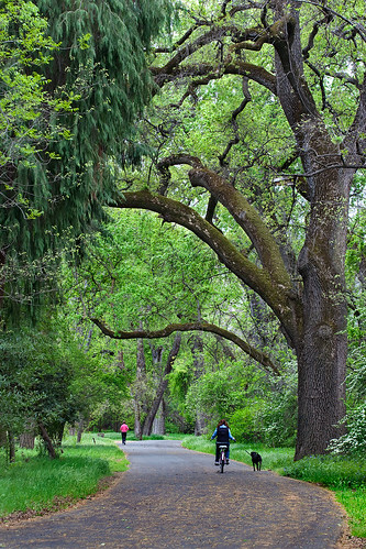 Bidwell Park in the Spring, Chico, CA