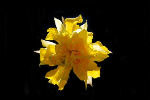 Double Daff-