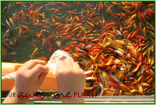Fish Feeding and Boating in Nuvali-22