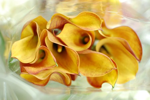 cala lilies