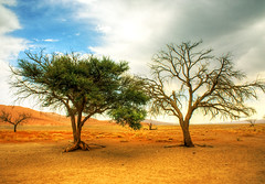 Namibia - desert 19 b (riisli) Tags: wood trees sky naturaleza mountain lake tree folhas nature colors pine alberi forest garden landscape arbole lago oak quercus desert natureza contest roots paisaje lagos cedar bonsai gnarly prize cypress awards arvore serra paysage tejo namibia arbre rvore strom baum montanha juniper albufeira paesaggio bonzai taxus raizes carvalho lagoas landschap racines namib pinheiro eiche pinus pohon drzewo juniperus aga vales drevo tern kintallnaturetrees horisontaalpaigutus leece