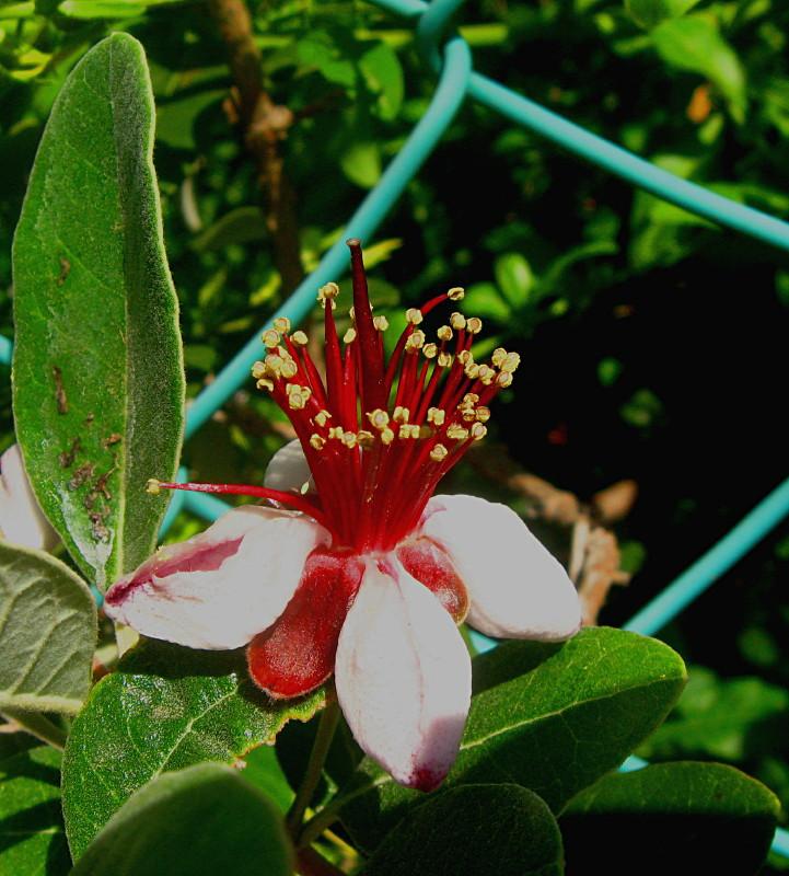 24-04-2010-flower-new2